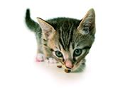 DLG-zertifizierte Produkte: Katze